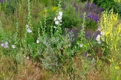 Fioritura dei fiori Immagini Stock Libere da Diritti