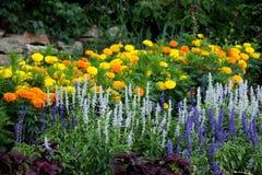 Fioritura dei fiori dell'assortimento del fiore di Flora Colourful Floral Background Wild fotografia stock libera da diritti
