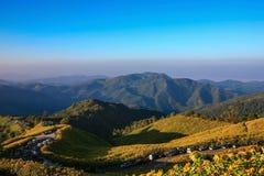 Fioritura dei girasoli messicani dappertutto sulla montagna Immagini Stock Libere da Diritti