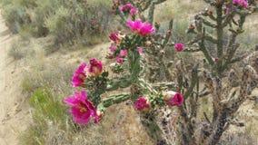 Fioritura del cactus immagine stock