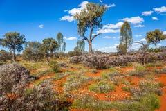 Fioritura del deserto immagine stock