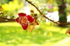 Fioritura del fiore Fotografia Stock