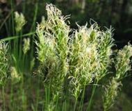 Fioritura dell'erba della foresta fotografia stock