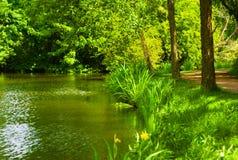 Fioritura dell'erba di estate riflessa nel canale immagini stock