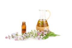 Fioritura dell'olio prudente e fragrante Immagini Stock
