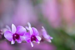 Fioritura dell'orchidea Immagine Stock Libera da Diritti