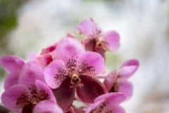 Fioritura dell'orchidea Fotografie Stock Libere da Diritti