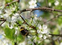 Fioritura della primavera fotografie stock