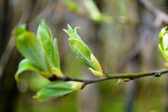 Fioritura della primavera Fotografie Stock Libere da Diritti