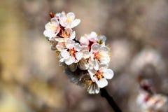 Fioritura della primavera Fotografia Stock