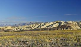 Fioritura della sorgente in Death Valley Immagini Stock