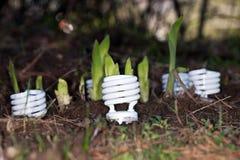 Fioritura delle lampadine di CFL Immagine Stock