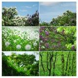 Fioritura di estate e della primavera Fotografia Stock Libera da Diritti