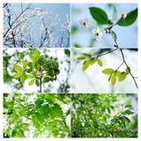 Fioritura di estate e della primavera Fotografia Stock
