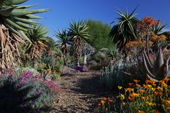 Fioritura di primavera in California ai giardini botanici di Taft, Ojai C Immagini Stock