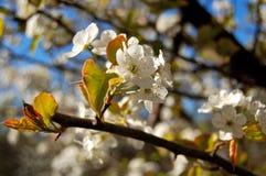Fioritura di tempo di primavera Fotografia Stock Libera da Diritti