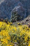 Fioritura gialla dei fiori con quarantanove oasi delle palme Fotografia Stock