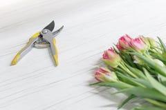 Fioritura mazzo rosa e bianco dei fiori del tulipano e strumento prunning dei tagli che mettono su fondo di legno bianco florist fotografia stock