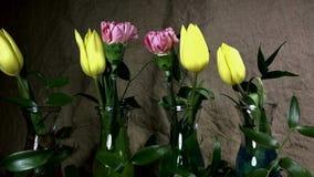 Fioritura rapida del fiore video d archivio