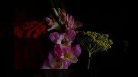 Fioritura rapida del fiore rosa archivi video