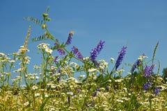 Fioritura rapida delle erbe selvatiche eterogenee di varietà Fotografia Stock