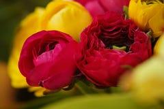 Fioritura variopinta dei fiori Fotografie Stock Libere da Diritti