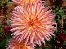 Fioriture dei fiori Fotografia Stock