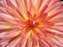 Fioriture dei fiori Fotografie Stock Libere da Diritti