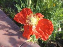 Fioriture del fiore Immagini Stock