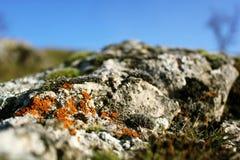 fioriture del muschio sulle pietre grige fotografie stock libere da diritti