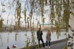 Fioriture della betulla nel parco al teatro di dramma I precedenti sono offuscati immagine stock libera da diritti