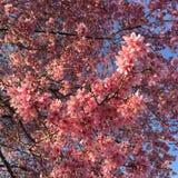 fioriture della molla fotografie stock libere da diritti