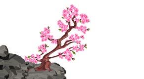 Fioriture di Sakura Ciliegio su una scogliera di pietra nelle montagne Illustrazione royalty illustrazione gratis
