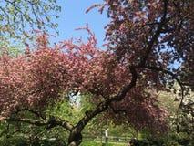 Fioriture di tempo di primavera Immagine Stock