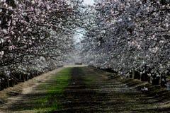 Fioriture di tempo di primavera Fotografie Stock