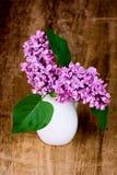Fioriture lilla Fotografia Stock