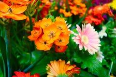 Fioriture molto arancio fotografie stock libere da diritti