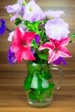 Fioriture variopinte della petunia in un lanciatore di vetro Immagine Stock