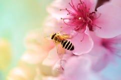 Fioriture variopinte ed ape del miele Fotografia Stock Libera da Diritti