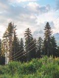 fios bondes e plantas verdes em bonito foto de stock royalty free