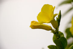 Fiower-Orchideen cllor Hinterhof natürlich Lizenzfreies Stockbild