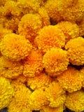 The fiowers. Yellow  marigolo  garden worship Royalty Free Stock Photo