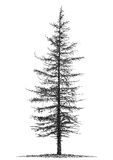 Fir. Schematic illustration of a tree Stock Image