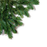 Fir. Corner, branch of fir isolated on white stock photography