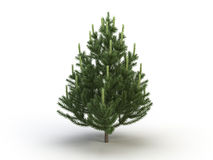 Fir. Nice fir object on a white background Stock Images