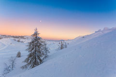 Fir alone in winter landscape Royalty Free Stock Images