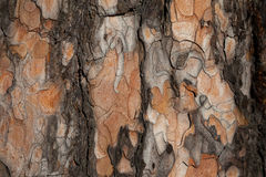 Fir bark background Royalty Free Stock Photos