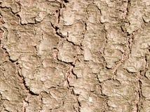 Fir bark texture Stock Photos