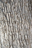 Fir bark texture Stock Photography