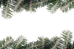 Fir Border. On a white background with copy space royalty free stock images